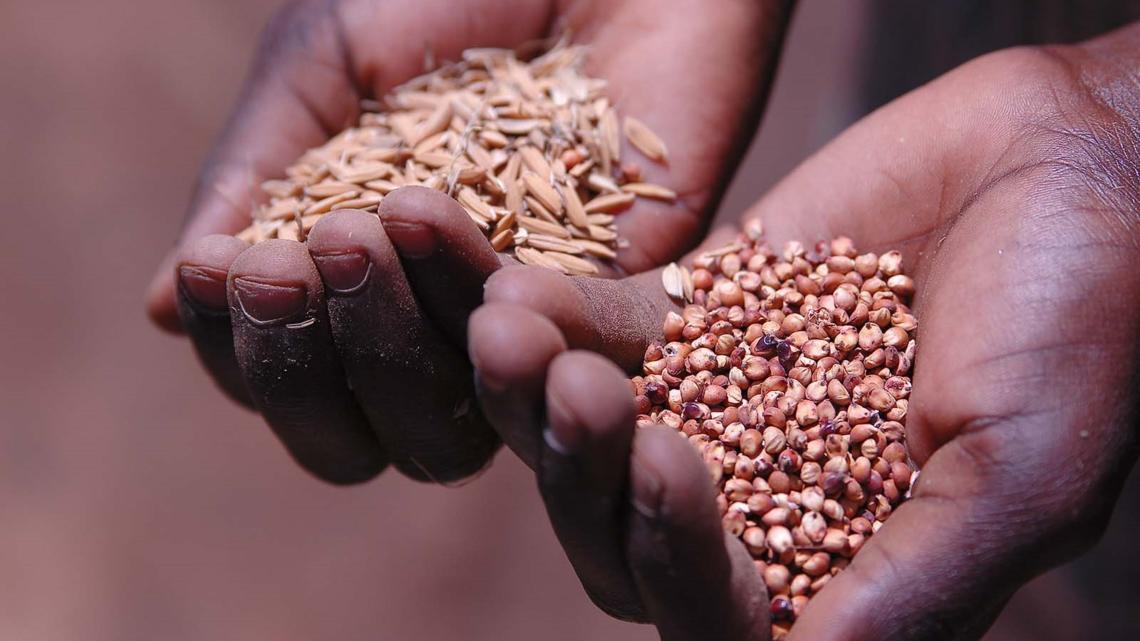 Ensure Global Food