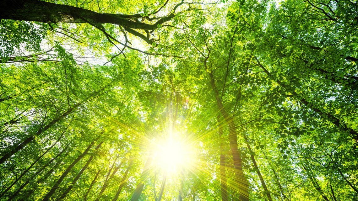 WBCSD to support the Task Force on Nature-related Financial Disclosures  (TNFD) - World Business Council for Sustainable Development (WBCSD)