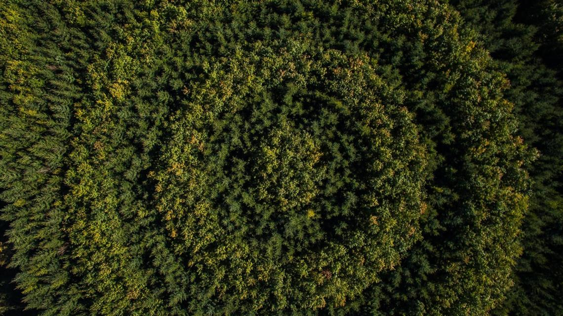 Reconnecting with nature through the circular bioeconomy – and forests