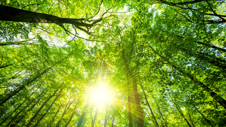 Скачать Forest Торрент - фото 5