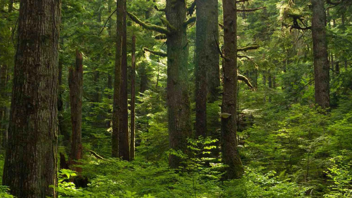 Forest Solutions Group World business council for sustainable