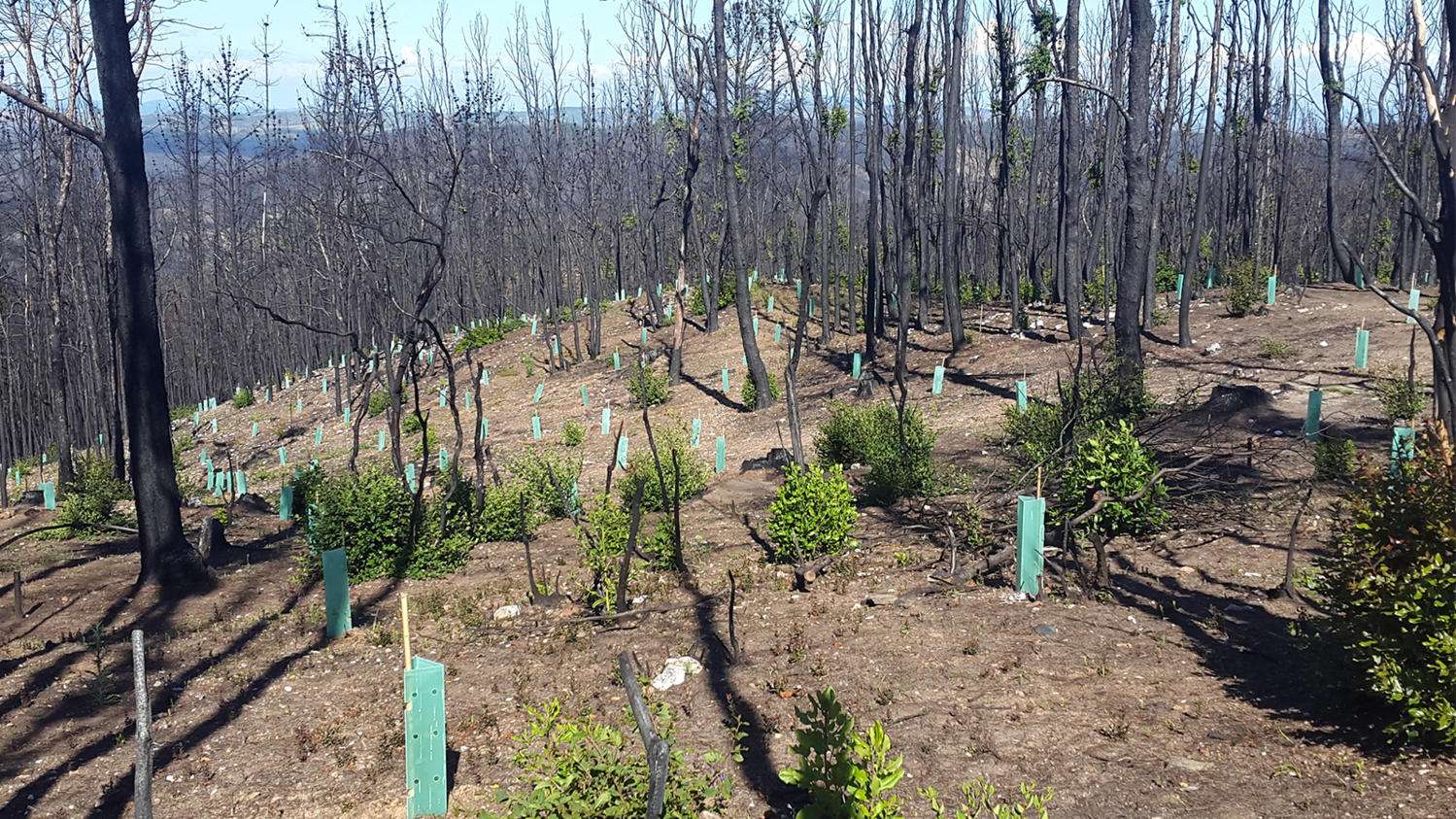 cmpc comparing two different forest restoration options for a